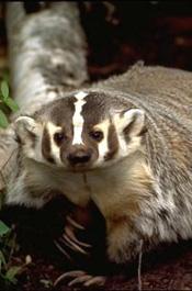 Kansas Fur Harvesters Association Inc